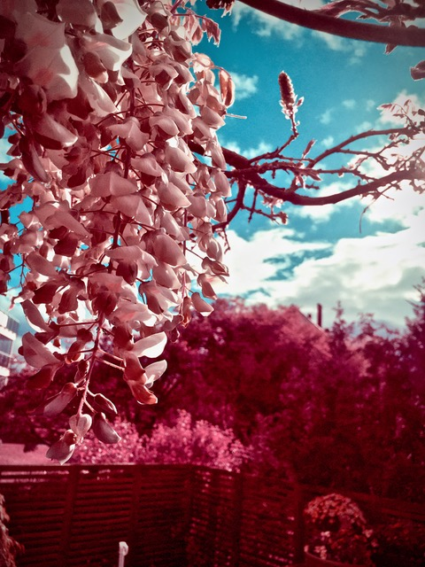 © 2020, David Milton, Infrared Interlude